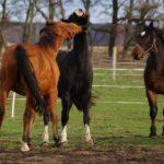 Zabawy koni