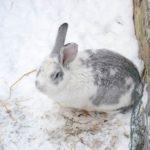 Zima w Tarze