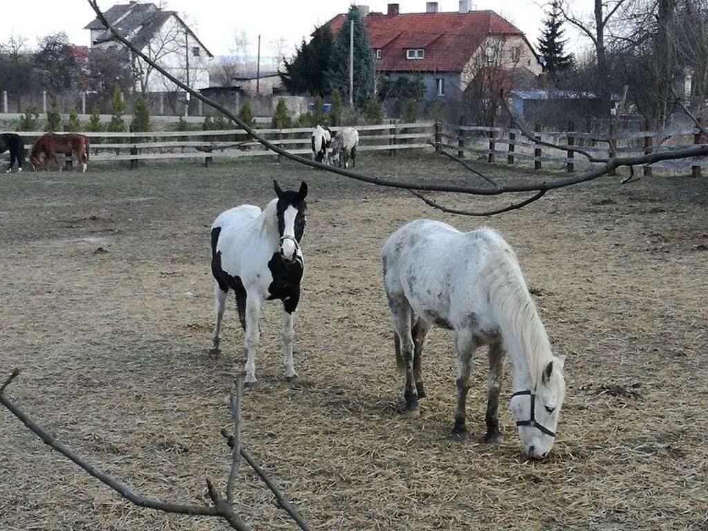 Zamiana koni