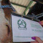 Zdjęcia z paszportami