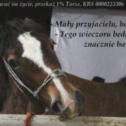 Stop Skaryszew