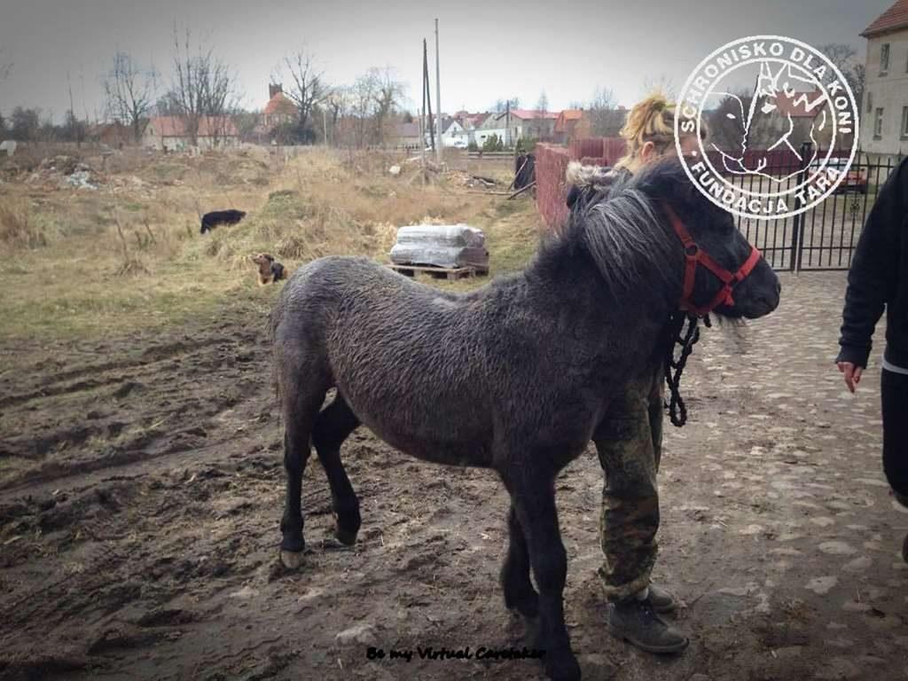Uratowany koń ze Skaryszewa
