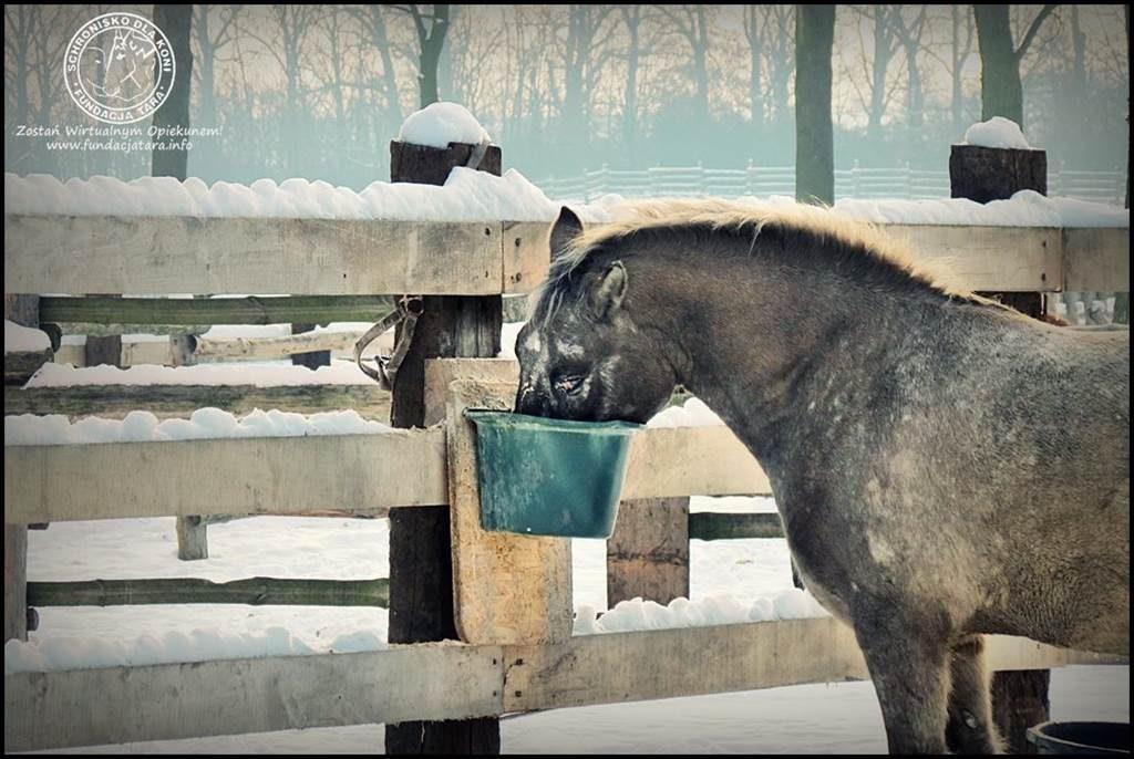 Posiłek koni