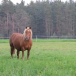 konie na pastwisku