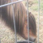 konie z lubelszczyzny