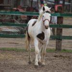 Galopady koni