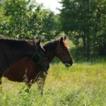 Przepęd koni
