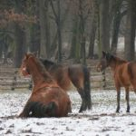 Zimowe konie