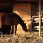 Tarowe konie