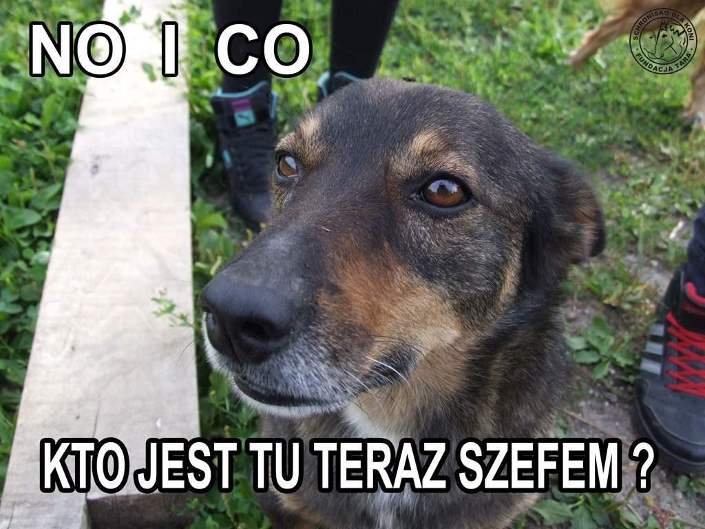 Szef Kozik
