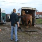 2 dzień transportu koni
