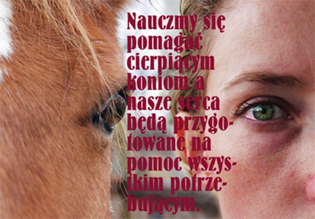 zlot opiekunów koni