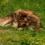 Psi odpoczynek