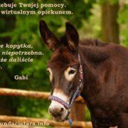 Oślica Gabi