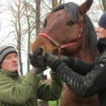 odrobaczanie koni