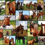 opiekunowie koni