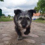Pomóż Borsukowi