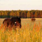 konie w słońcu