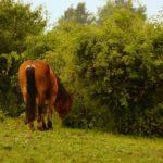 Trawa dla koni