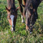 Uratowany koń