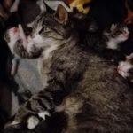 Koty z Matplanety