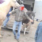 Targ koni