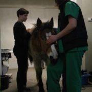 koń na klinikach