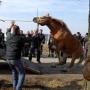 Bicie konia
