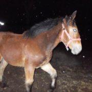 Uratowane konie