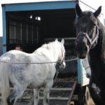 Targ dla koni