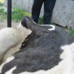 Targ dla zwierząt
