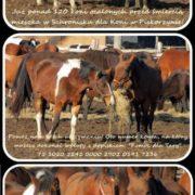 jesienne konie