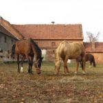 Wolne konie