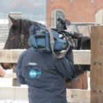 Media w Tarze
