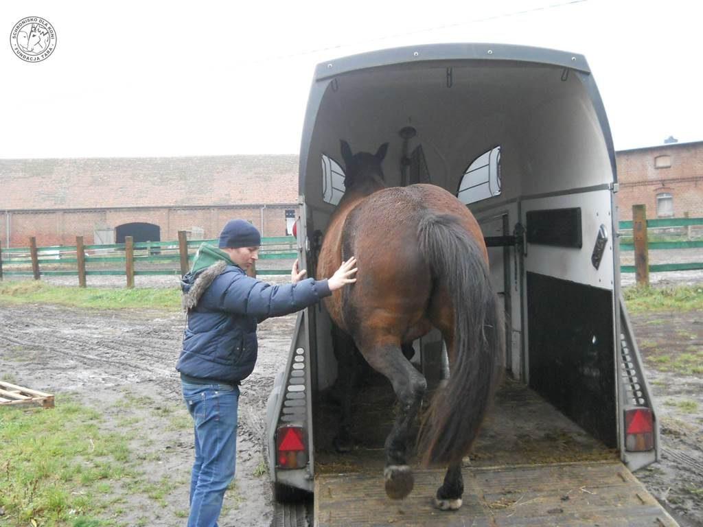 Powroty koni
