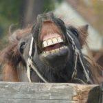 Śmiech zwierząt