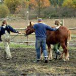 Kastracja koni