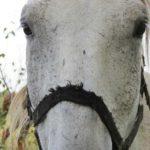 Końskie kantary