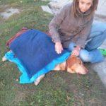 Potrącony pies