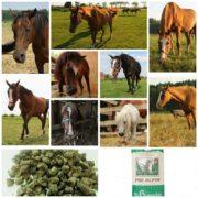 Jedzenie dla starych koni