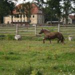 Wesołe konie