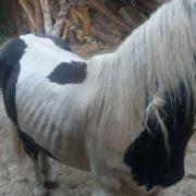 Koń ze Skaryszewa