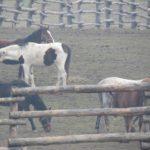 Konie na górce