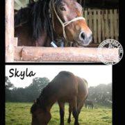 Zmiany u koni