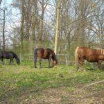 Konie w parku.