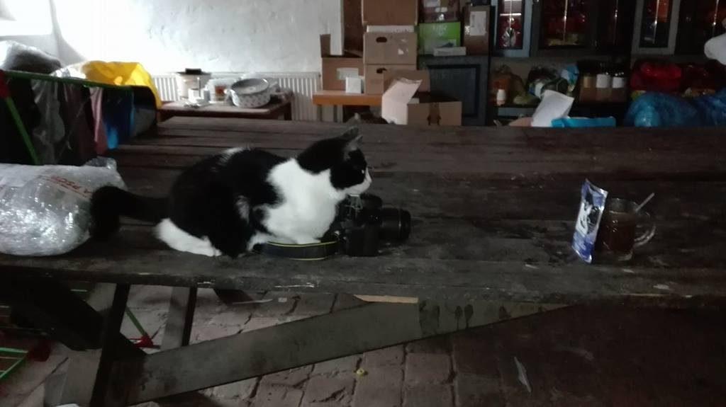 Kot pstrykający