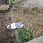 Nowy zajc