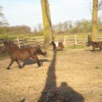 Roszady koni