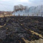 Spalenie łąki