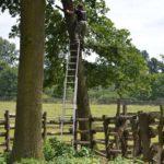 Obcinanie gałęzi